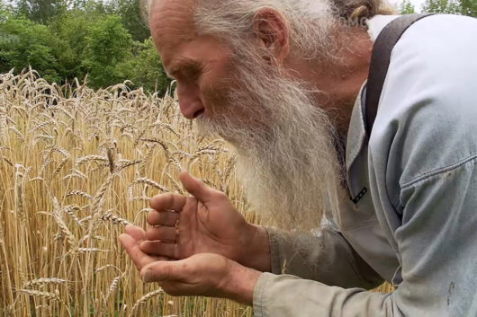 FilmSpecial/Dokufilm des Monats: Unser Saatgut – Wir ernten, was wir säen